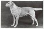 Paternal Ancestor: DCh. Staindrop Saighdear, b. 1944